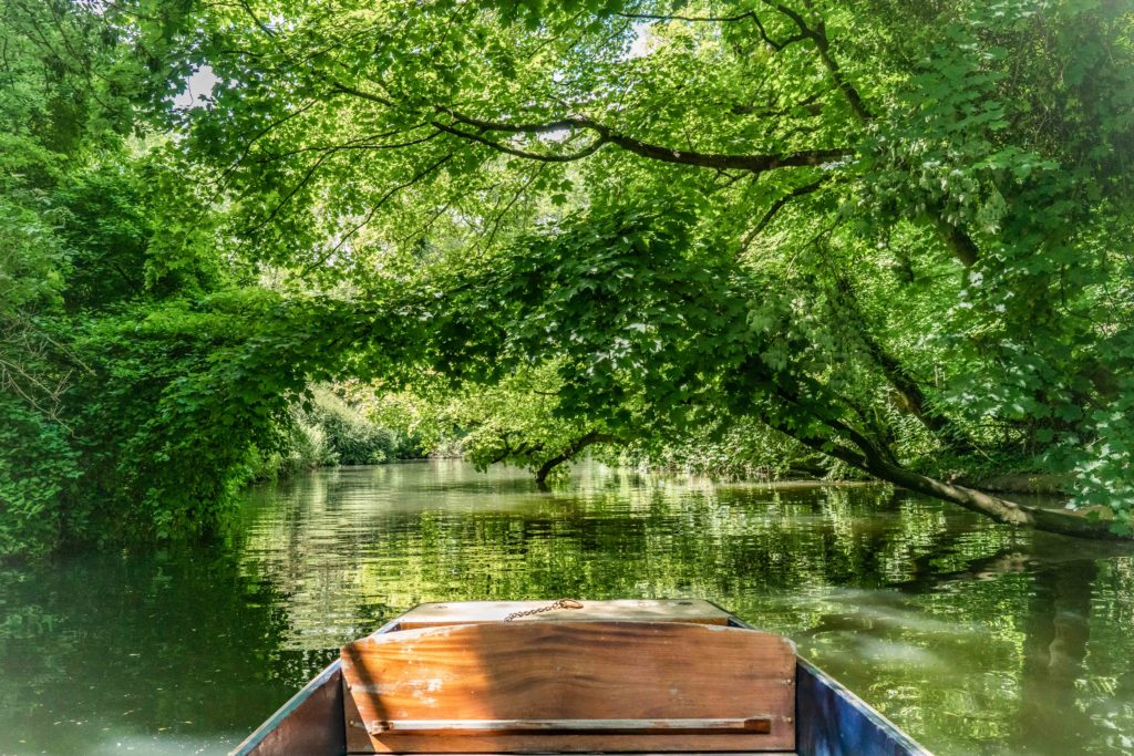 Front of a boat in the middle of a river with overhanging trees