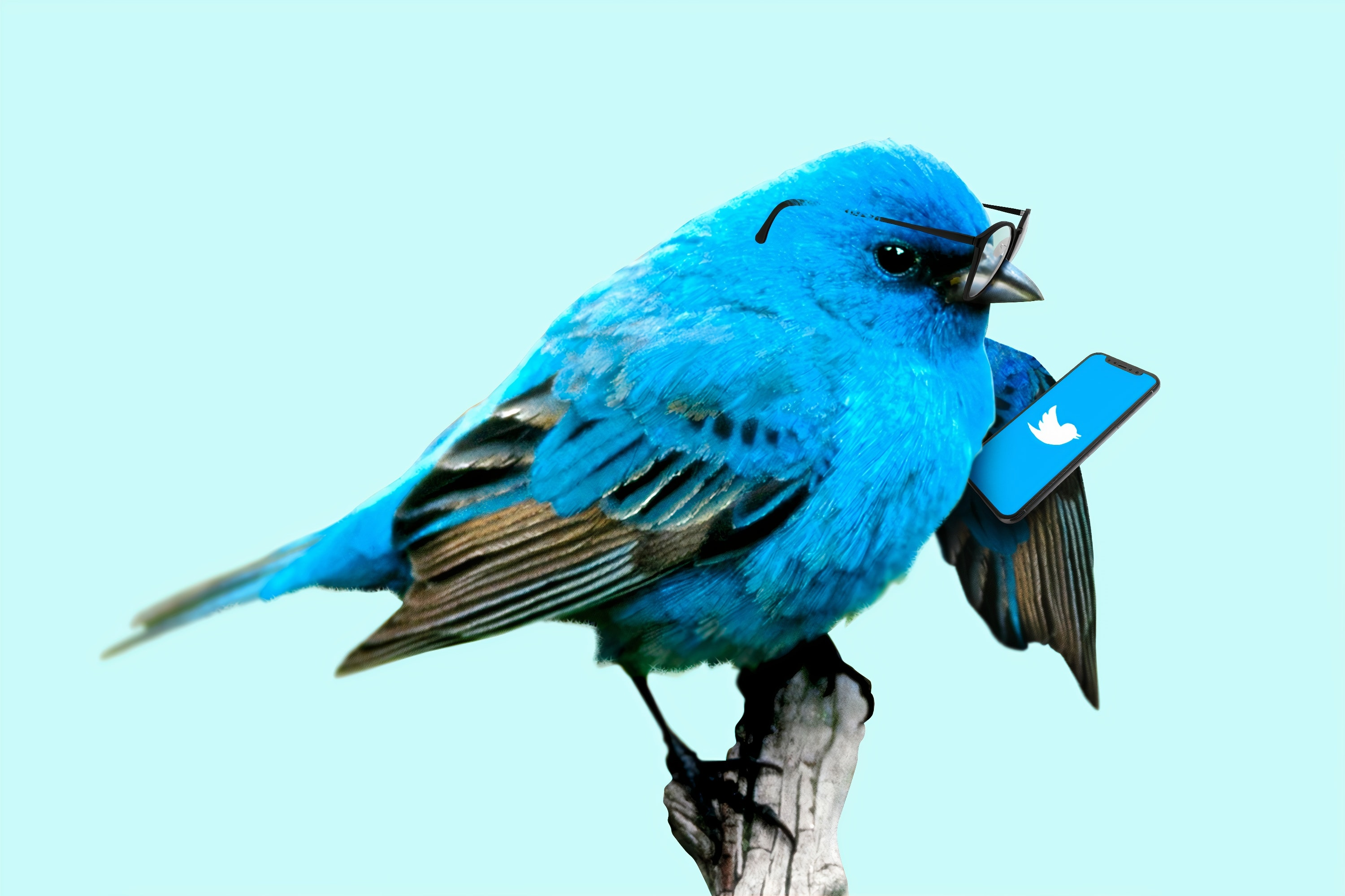 Twitter tips for Academics: how to tweet about your publication