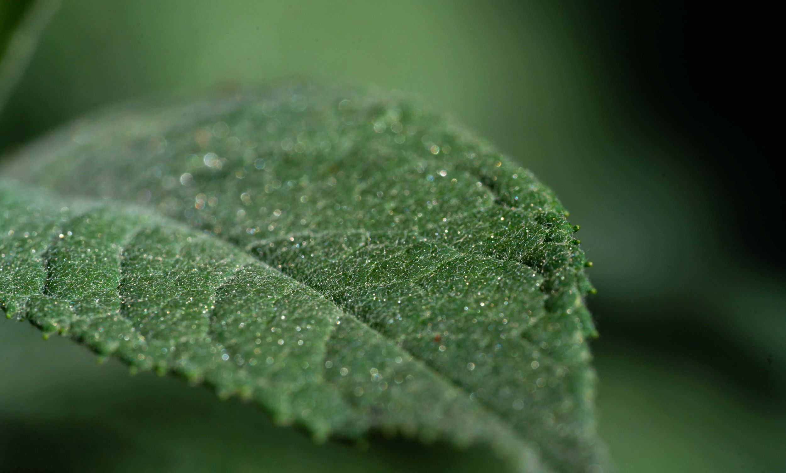 How to make your lab greener: an interview with the FMP Green Initiative